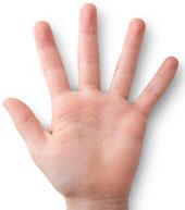 Os dedos da mão em inglês
