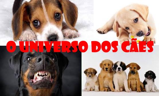 O universo dos cães
